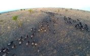 Homemade Safari: Incredible Drone Footage Of Serengeti Wildlife