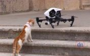 Cats VS Drones Mega Compilations November 2016. Funny cats.